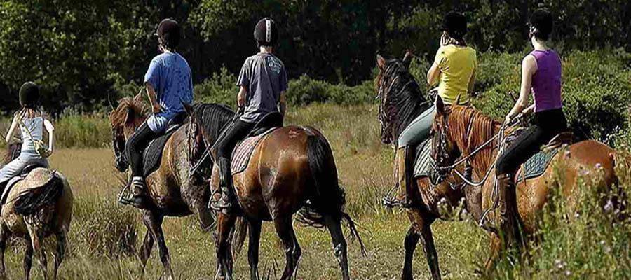 caballos1_tuacbi (2)