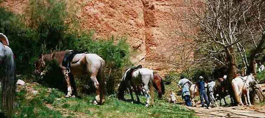 caballos1_tuacbi (3)